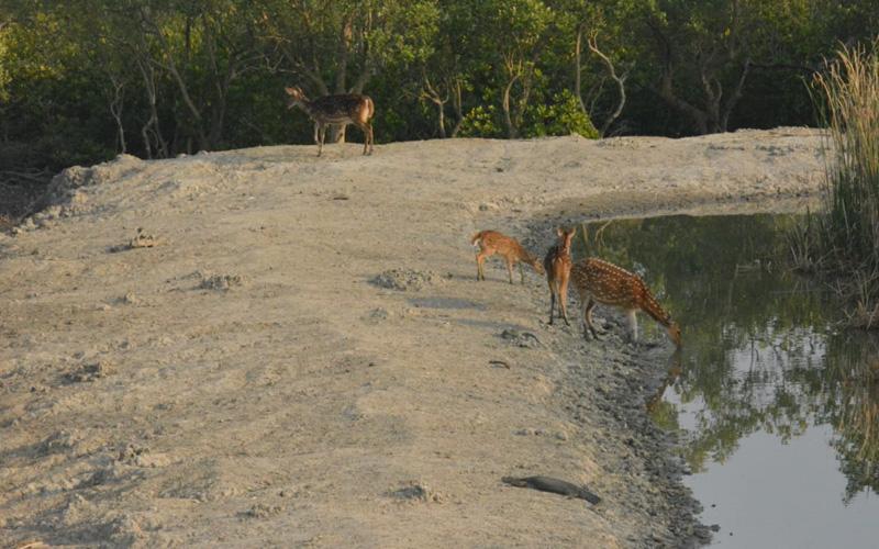 Sundarban Wildlife
